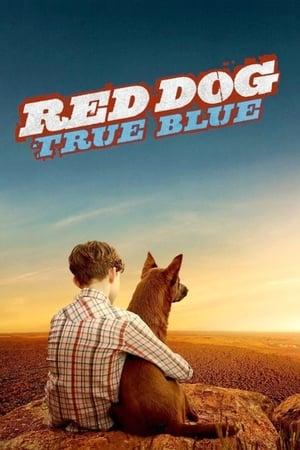 Vörös kutya - A kezdetek