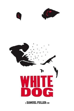 Fehér kutya