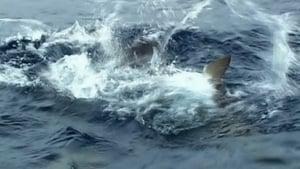 Nyílt tengeren háttérkép