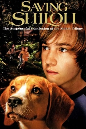 Csavargó kutya 3