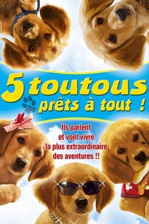 Nagypályás kiskutyák poszter