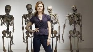 Dr. Csont kép
