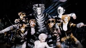 Macskák háttérkép
