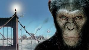 A majmok bolygója: Lázadás háttérkép