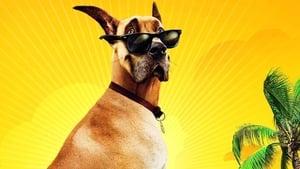 A kutyakomédia háttérkép