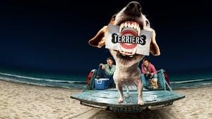 Terriers kép