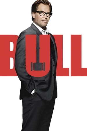 Bull poszter