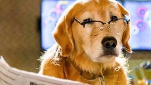 Cats & Dogs 3: Paws Unite háttérkép